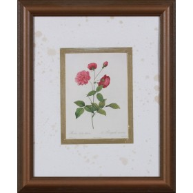 Animating China Rose - Exklusive Einrahmung 48 x 58 cm