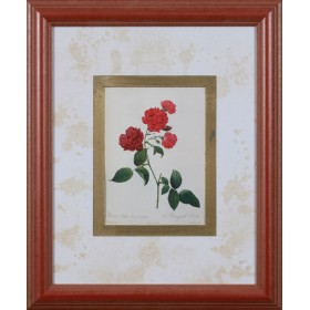 Carnation China Rose - Exklusive Einrahmung 48 x 58 cm